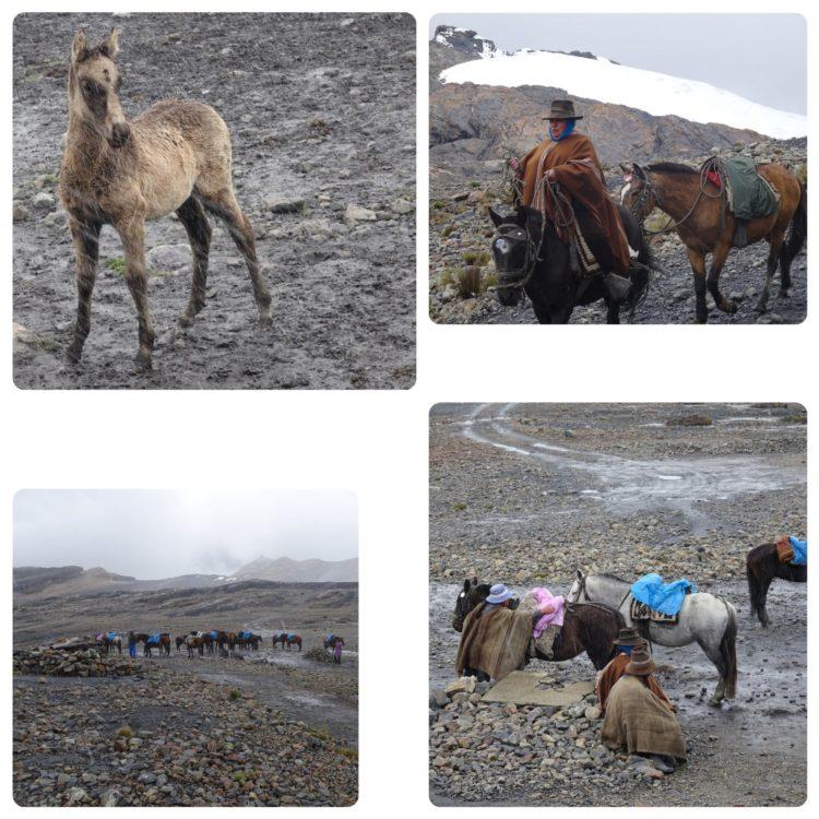 Jeune poulain sous la neige et service de cheval pour aider les touristes à accéder au glacier sans trop d'efforts