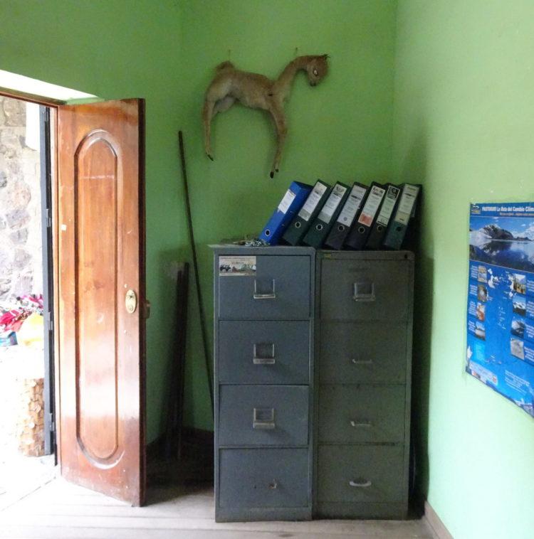 Vicuña empaillée dans le bureau du poste contrôle à l'entrée du parc naturel de la Quebrada Carpa