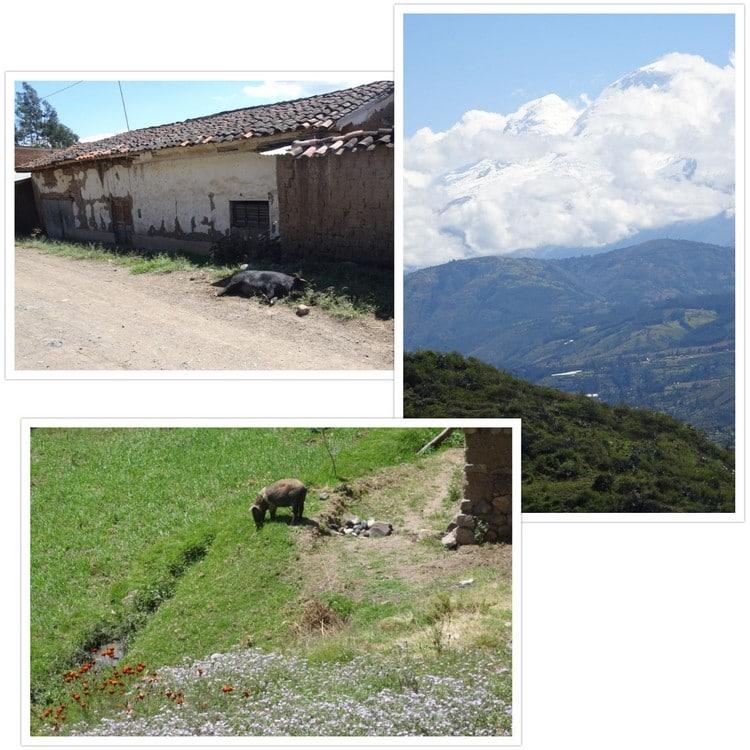 Cochons et montagnes